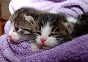 Ratgeber für Kratzbäume, Kitten, Katzenbabys