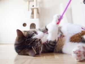 Kratzbaum kaufen, Katze spielt mit Spielzeug