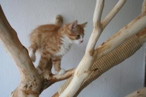 Kratzbaum kaufen, Katzensport auf Kratzbaum